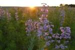 GardenTour_DEW2012